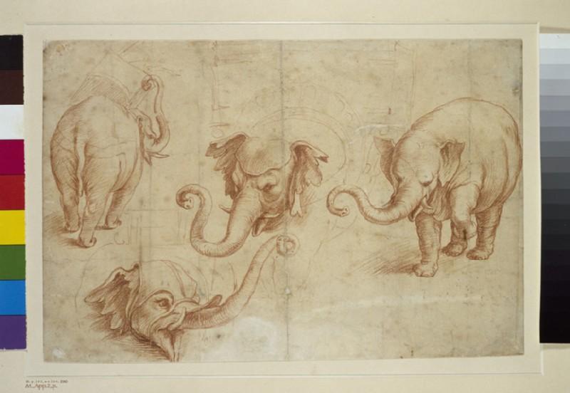Four Studies of an Elephant (WA1846.226)