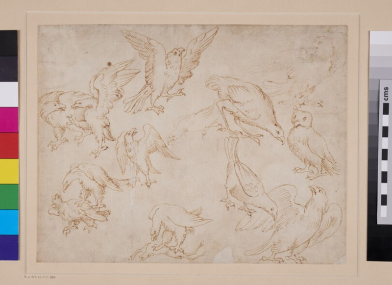 Studies of Eagles and other Birds (WA1846.232, recto)