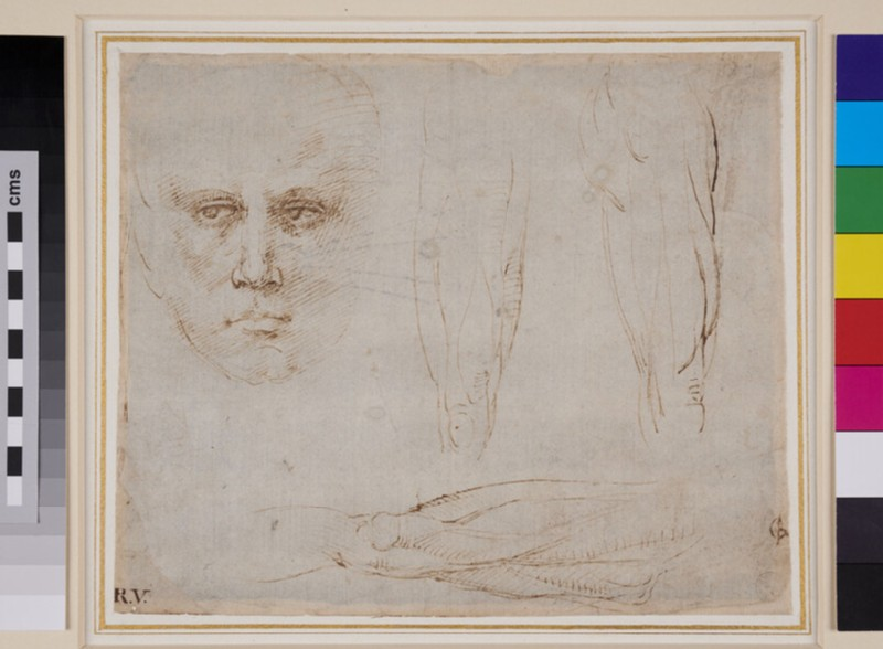 Studies of a Man's Head and Legs (WA1846.264, recto)