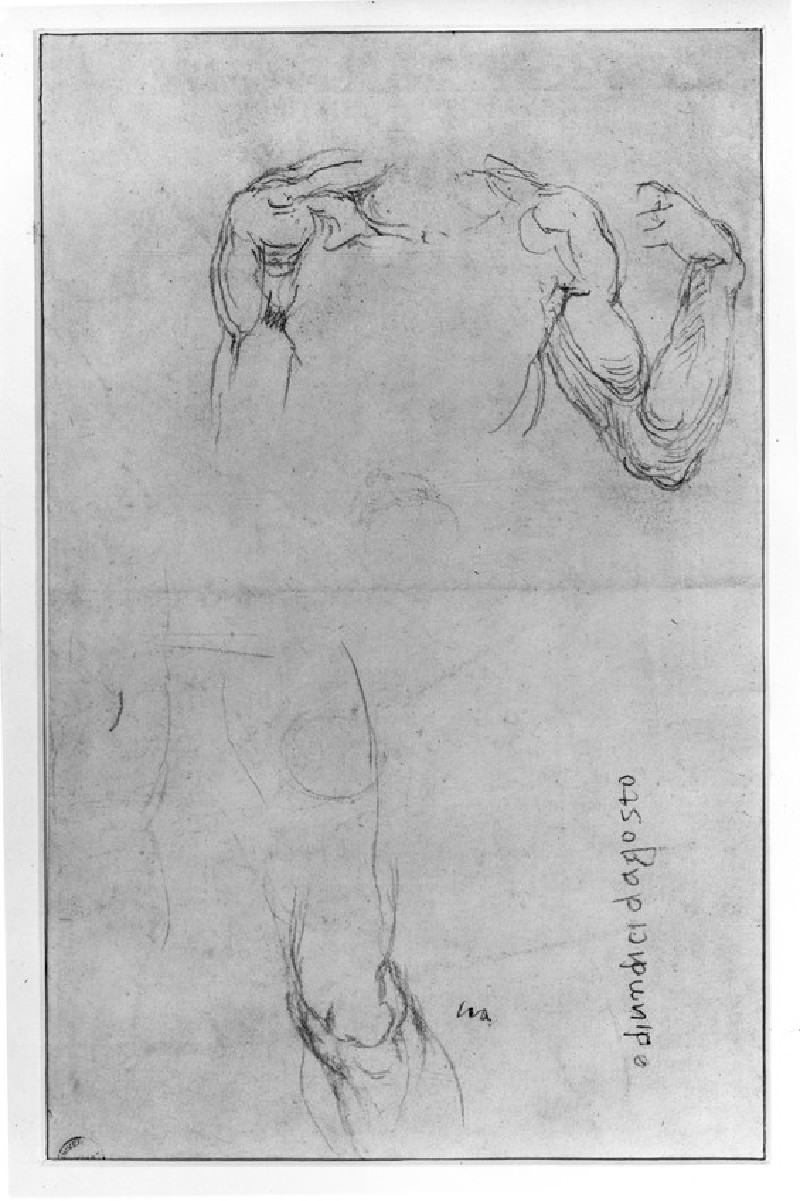 Recto: Studies of Anatomy