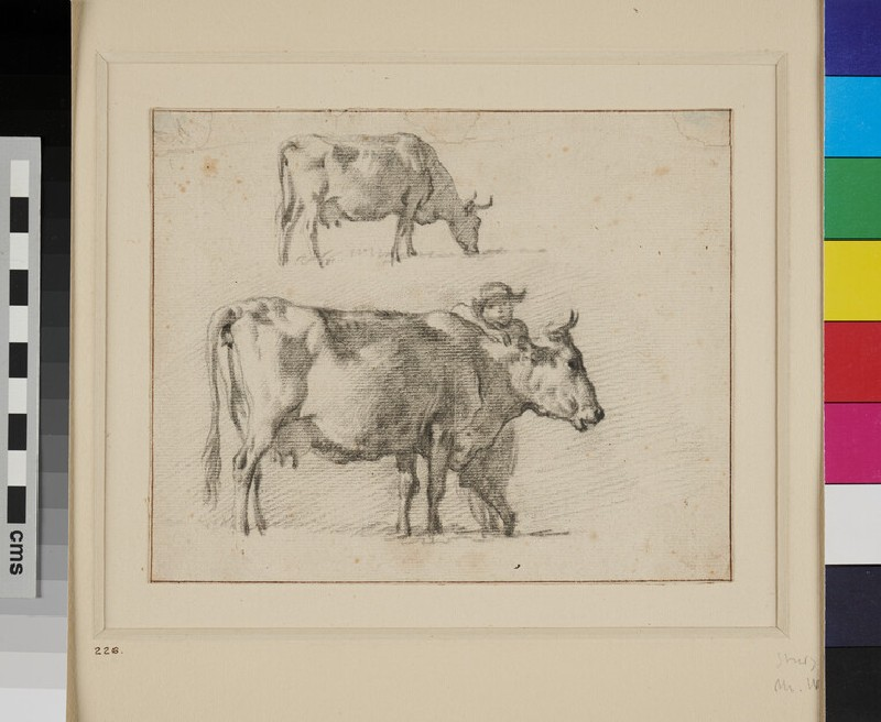 Two Studies of a Cow (WA1855.108, recto)