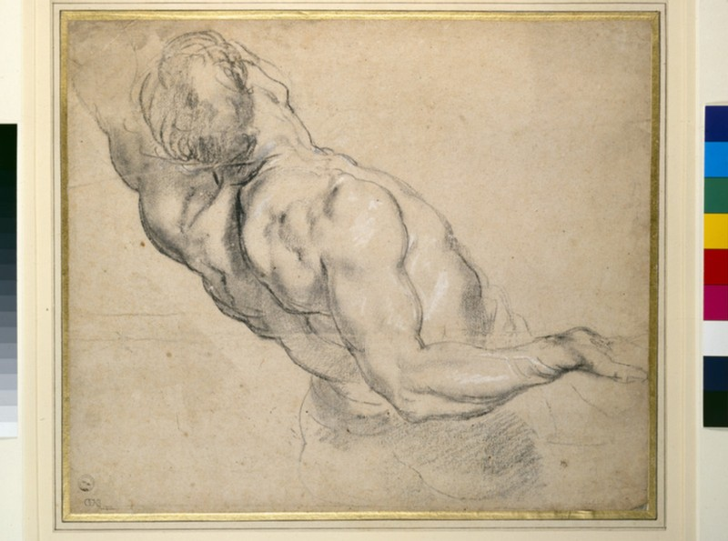 Study of a nude male torso