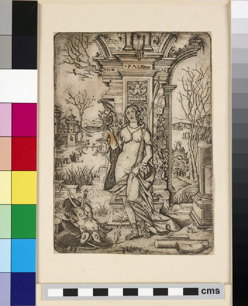 Pallas Athena (WA1863.1754)