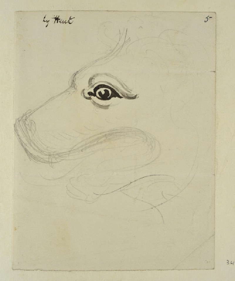 Study of the Head of a Dog