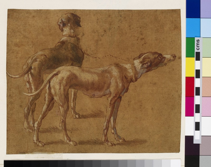 Drawing of two greyhounds (WA1925.342.41.2)
