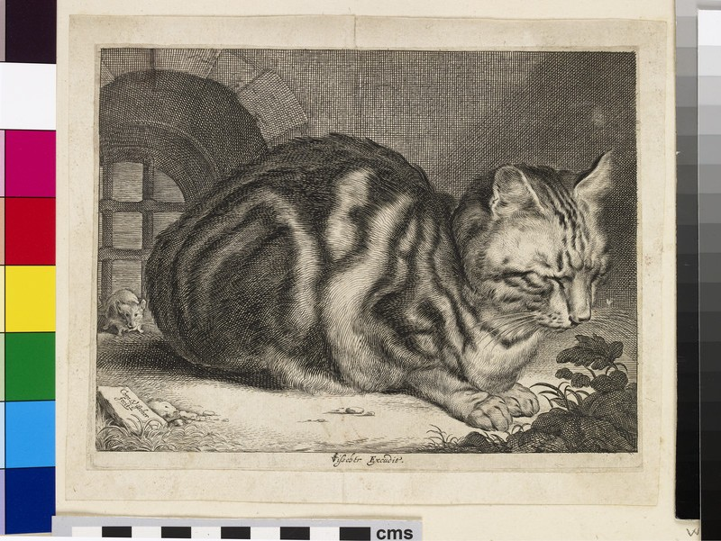 The Large Cat (WA1925.345.143)