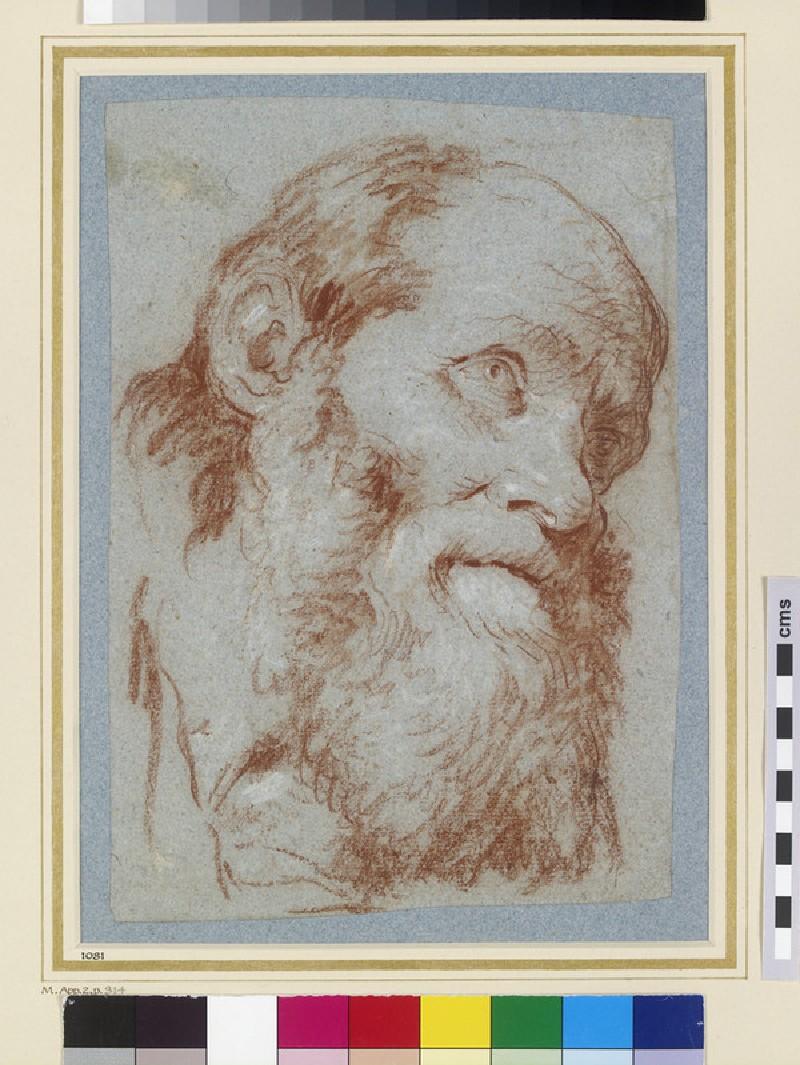 Head of an old bearded Man