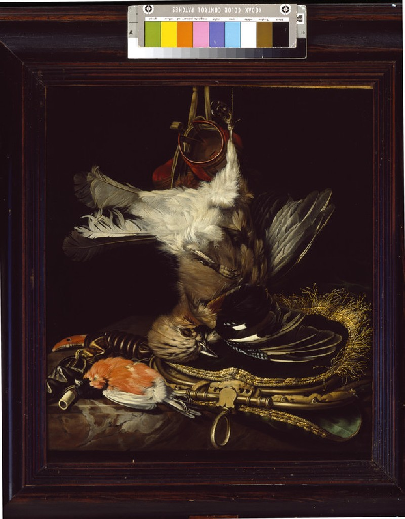 Still Life with a dead Jay