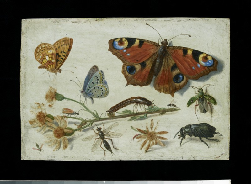 Three Butterflies, a Beetle and other Insects, with a Cutting of Ragwort