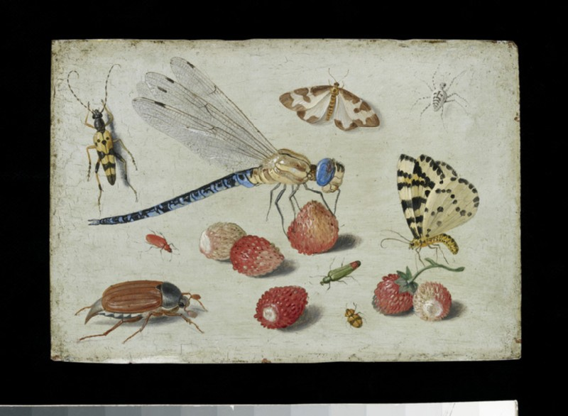 A Dragon-fly, two Moths, a Spider and some Beetles, with wild Strawberries (WA1940.2.43)