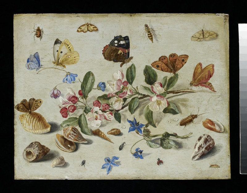 Flowers and Insects (WA1940.2.44)