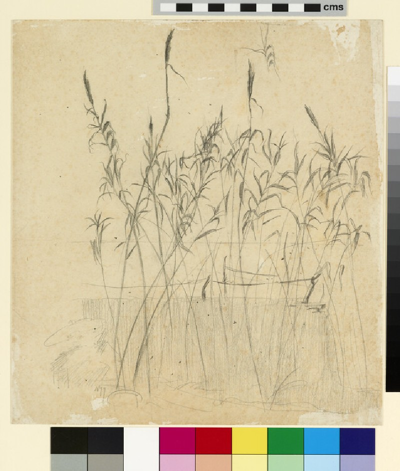 Study of grasses beside a lake, with boats moored in the middle distance (WA1941.108.110)