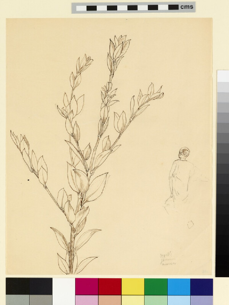 Study of a branch of myrtle, and an Egyptian figure seen from behind (WA1941.108.136)