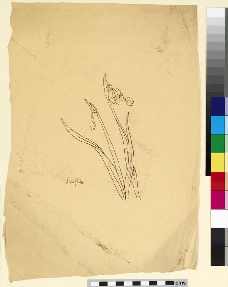Study of snowflakes (WA1941.108.150)
