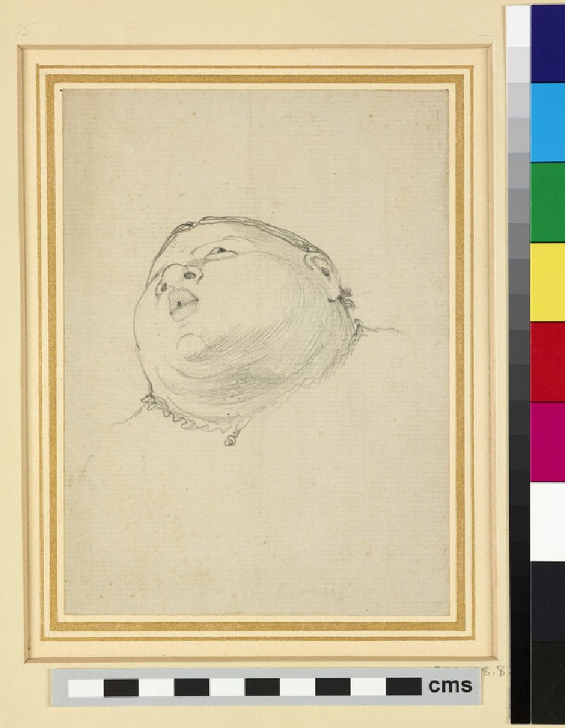 Caricature of a Baby's Head (WA1941.108.8)