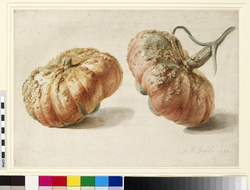 Study of two gourds (WA1942.25)