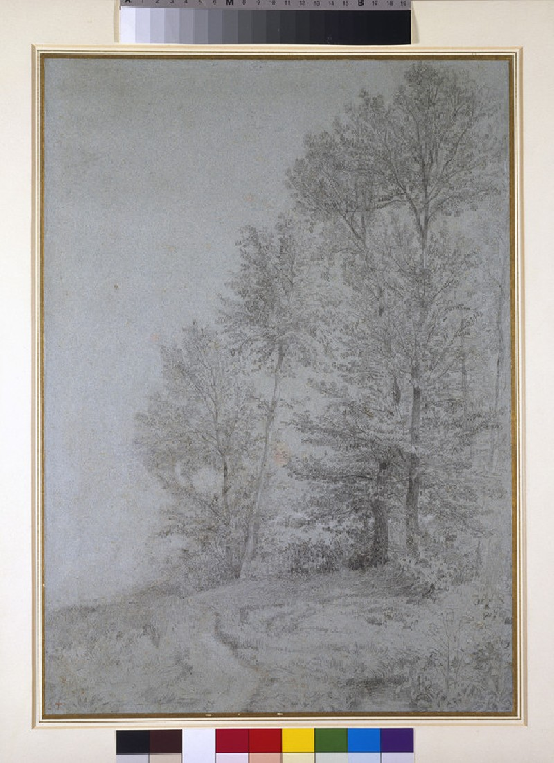 A path with trees on the right (WA1942.33)