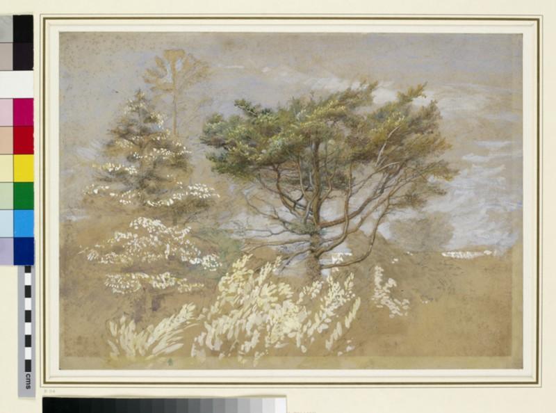 Study of Trees (WA1950.28, WA_1950_28)