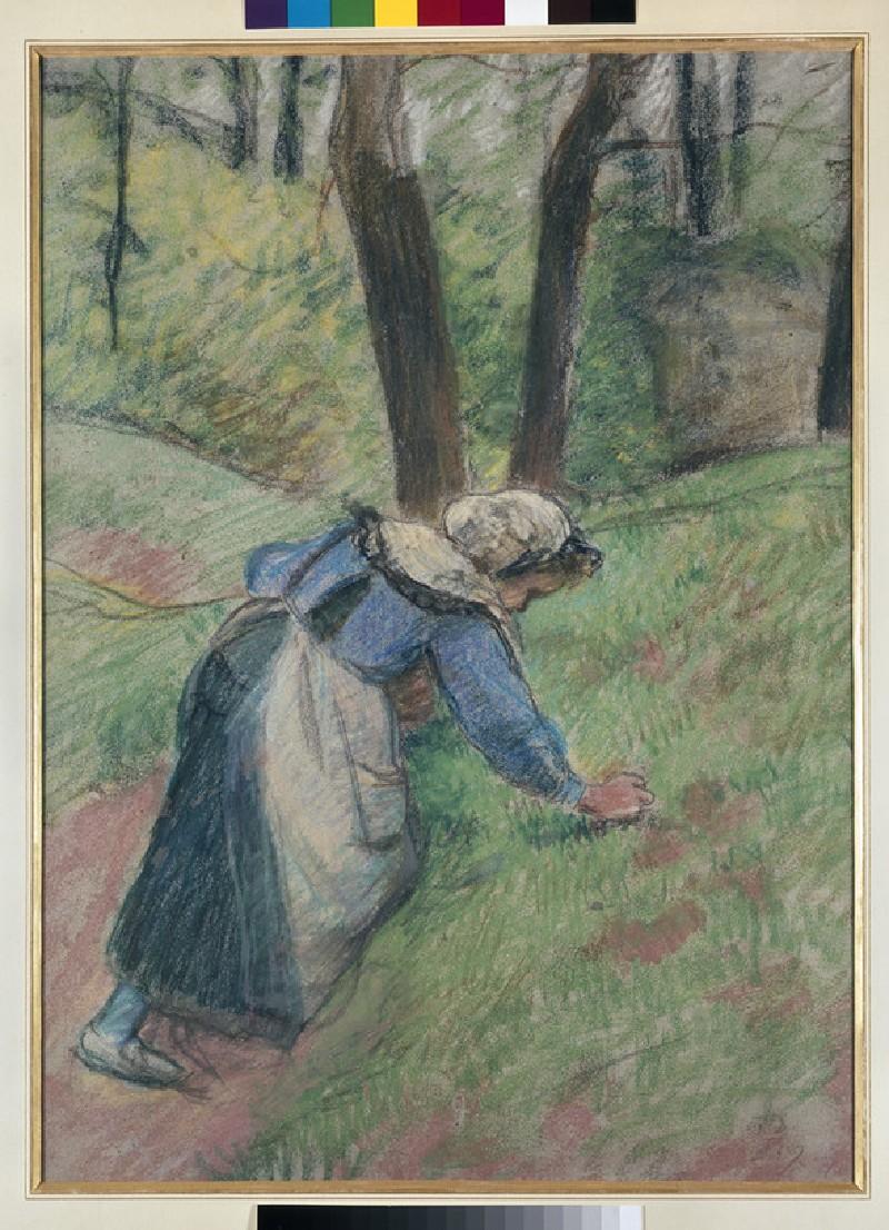 Female peasant picking grass
