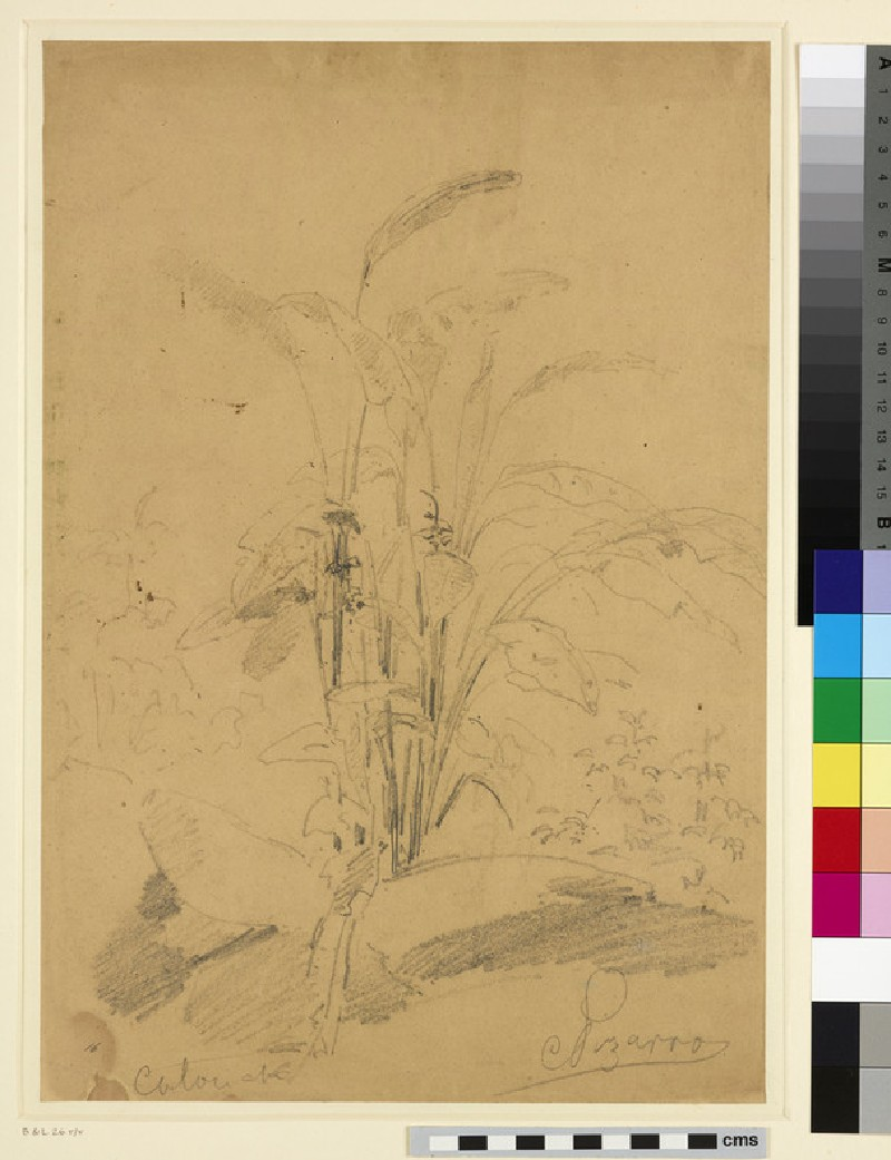 Recto: Study of a Plant<br />Verso: Study of Figures in a wooded Landscape (WA1952.6.45)