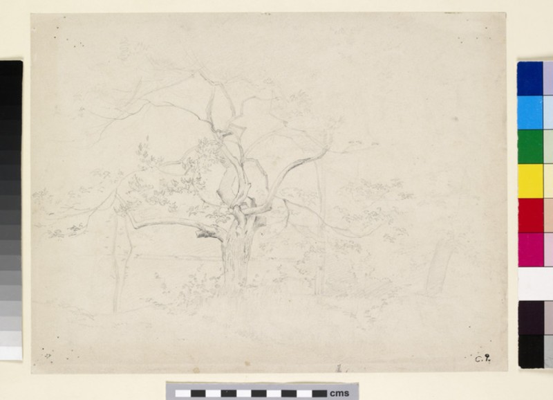 Recto: Study of a Tree<br />Verso: Studies of female Peasants gleaning