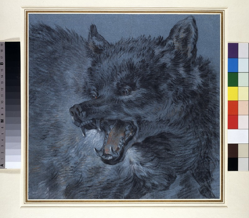 Head of a wolf (WA1952.77)