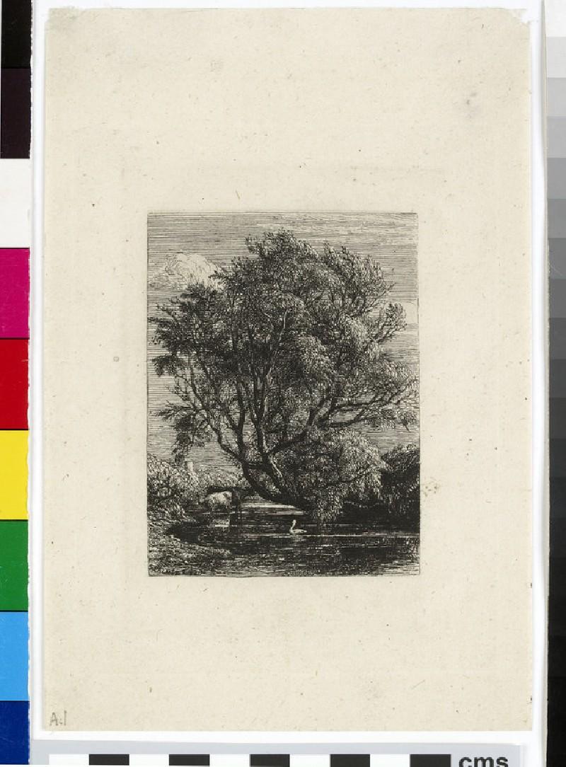 The Willow (WA1954.110)