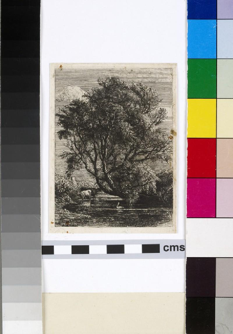 The Willow (WA1954.111)