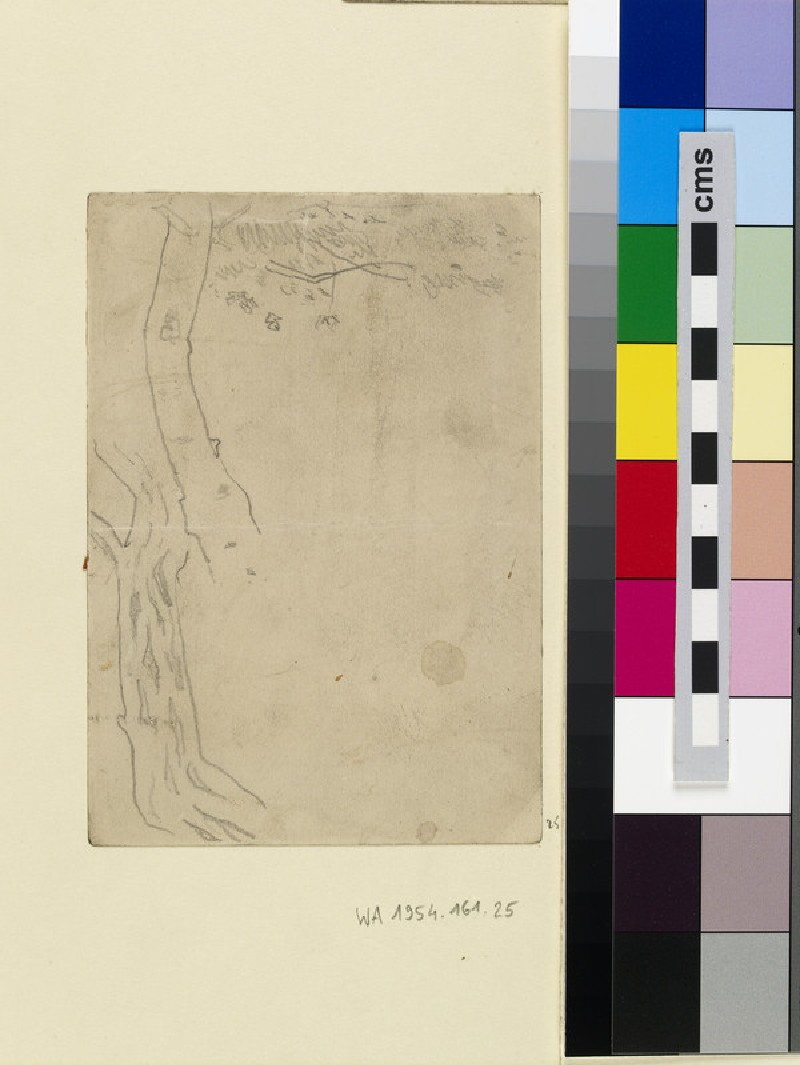 Studies of a Tree Trunk (WA1954.161.25)