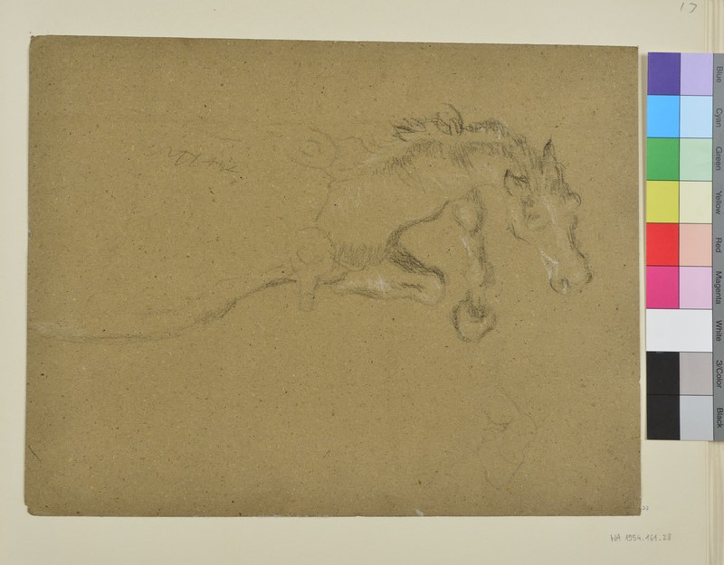 Study of the Foreparts of a Horse (WA1954.161.28)