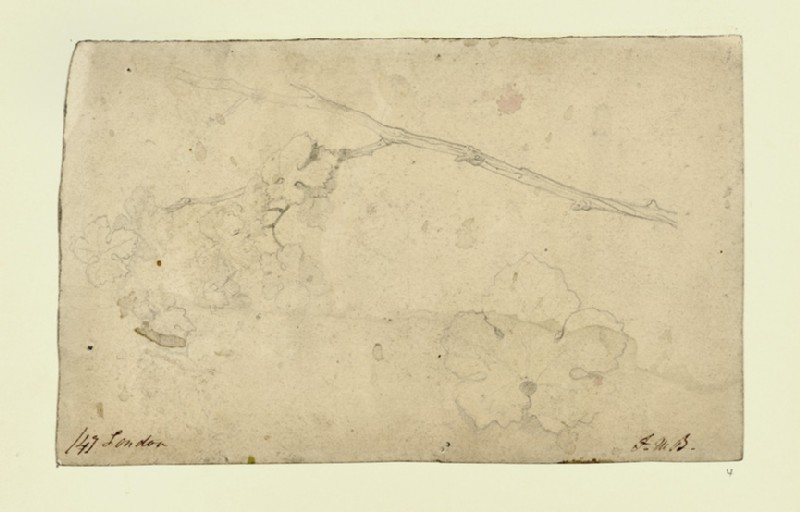 Recto: Study of a Sycamore Twig and Leaf<br />Verso: Sketches of Gothic Arches (WA1954.161.4)