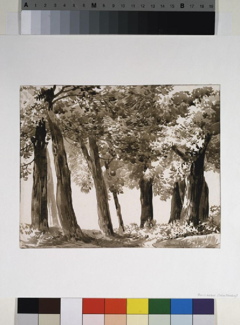 Woodland Landscape (WA1954.70.111)