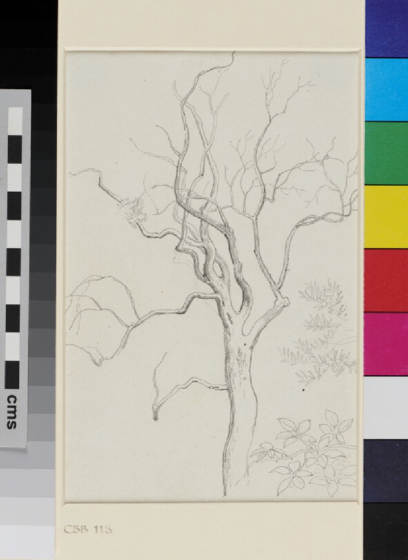 Studies of a bare Tree and two Types of Foliage (WA1954.70.141, recto)