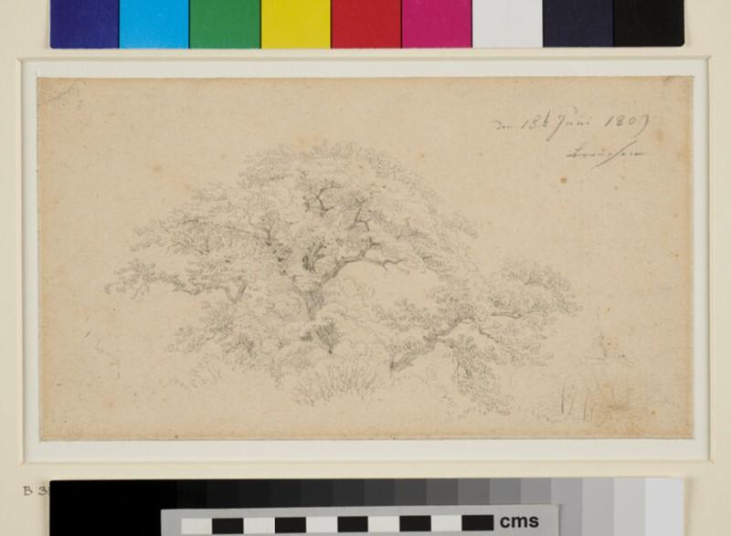 Study of an Oak Tree and a Church (WA1954.70.95, recto)