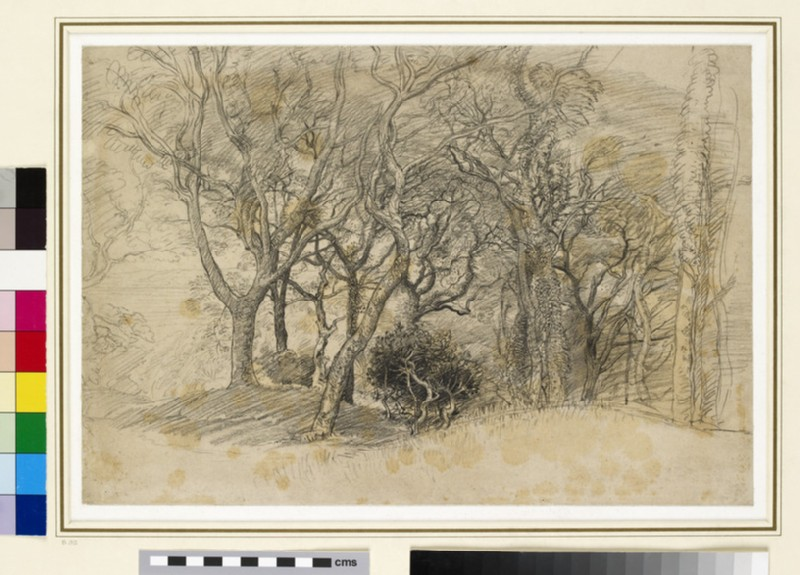 Study of Trees, Clovelly Park (WA1954.97)