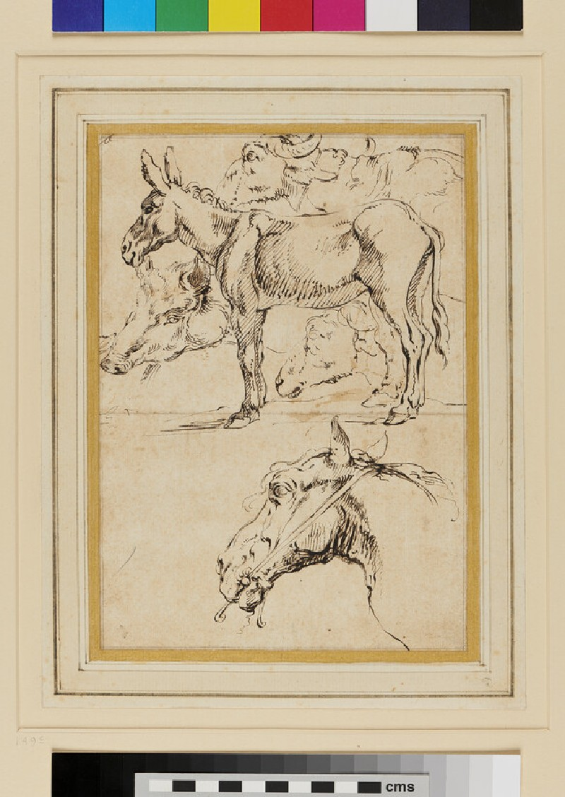 Studies of a Donkey and other Animals (WA1955.44, recto)