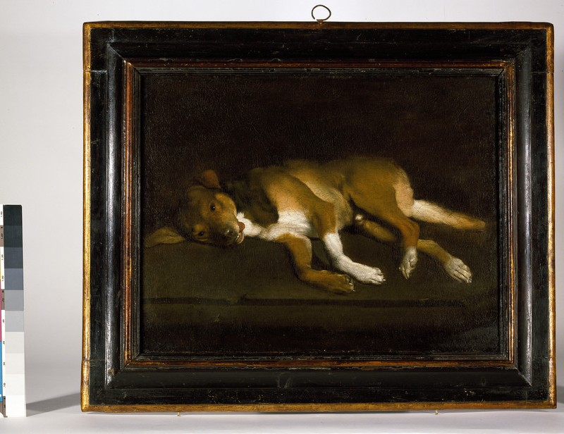 A Dog lying on a Ledge (WA1957.59.2)