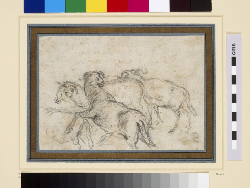 Study of four sheep in movement