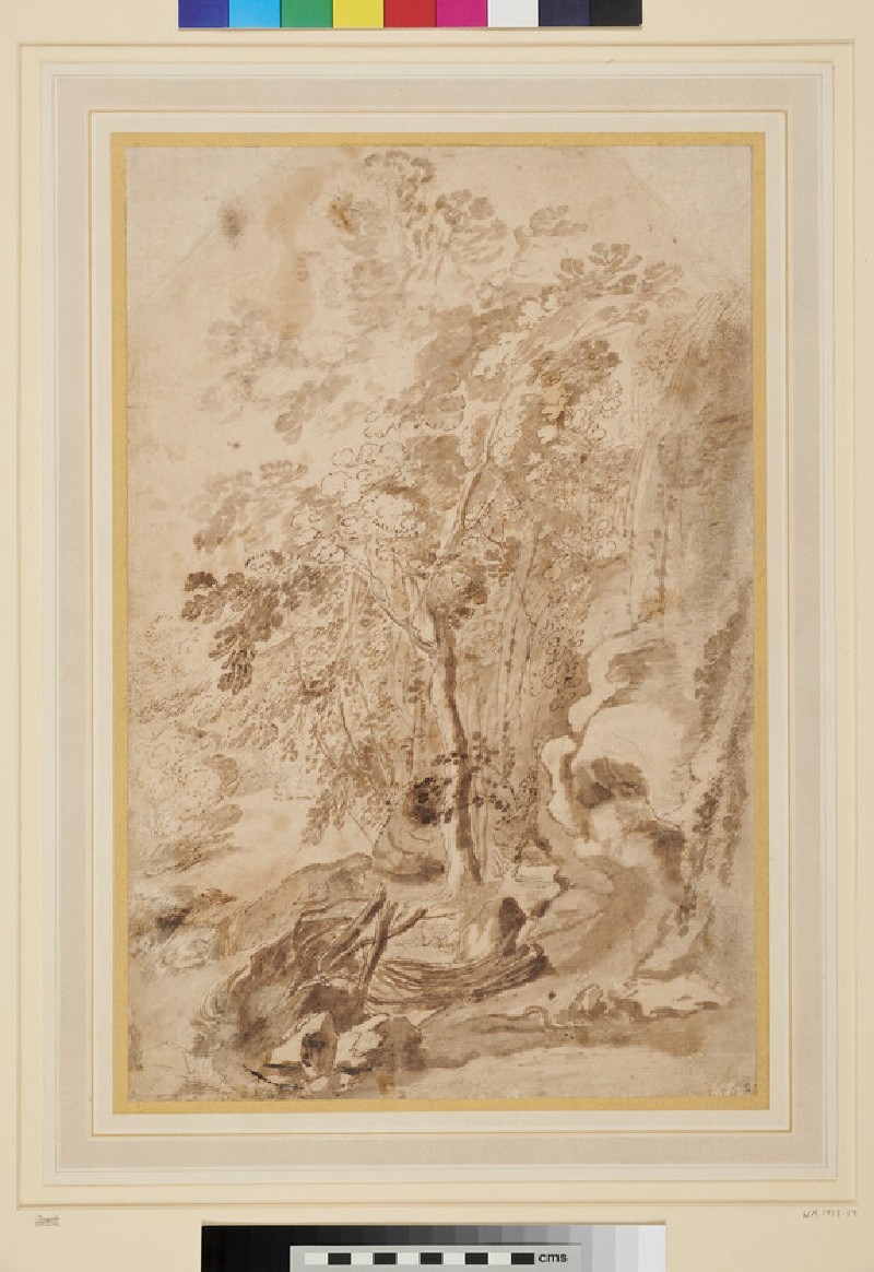 Study of a Ravine with a Tree (WA1958.59, recto)