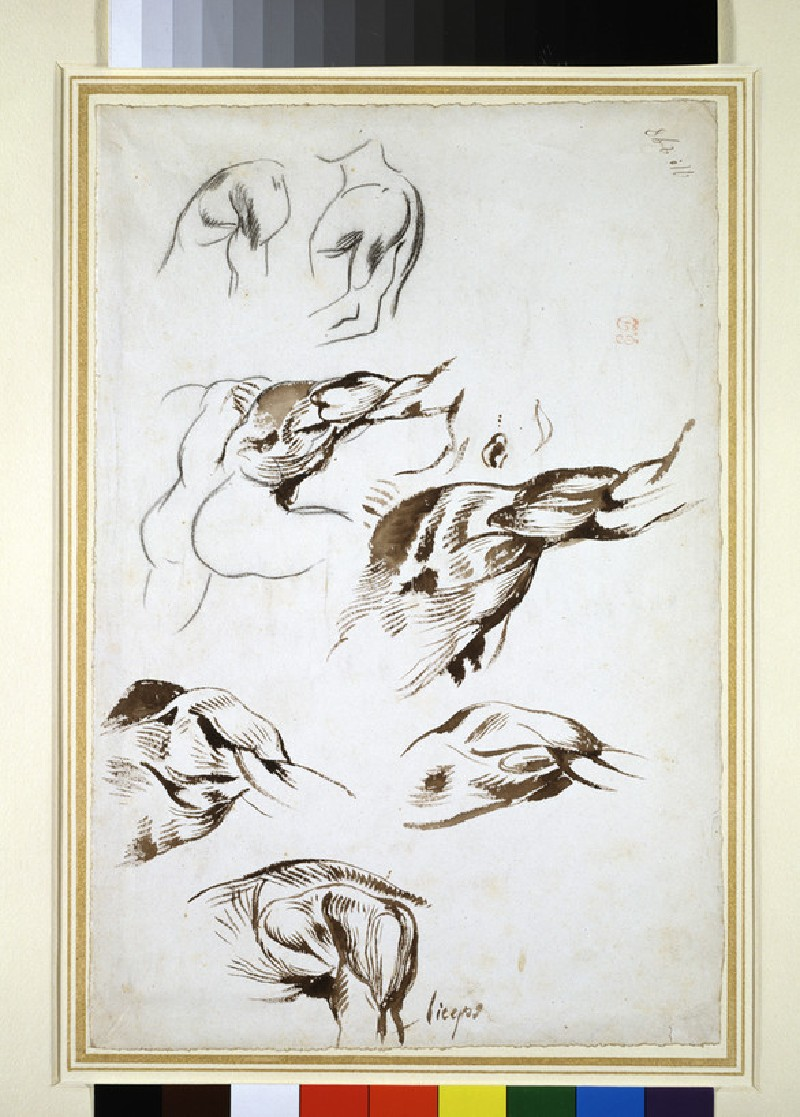 Seven anatomical studies of upper arms and shoulders (WA1965.1.8)