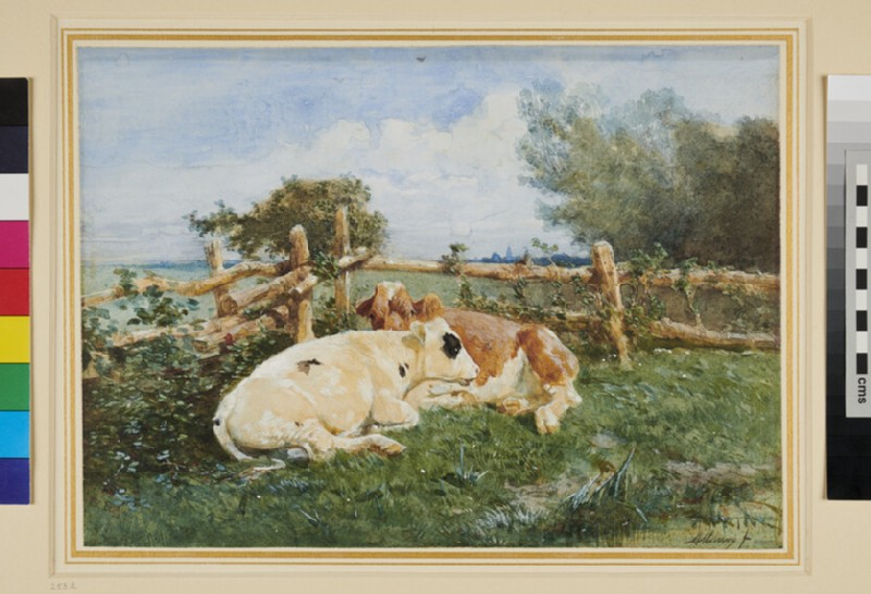 Two Cows lying in a Field by a Fence