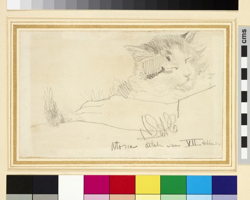 Study of a Cat, Atossa