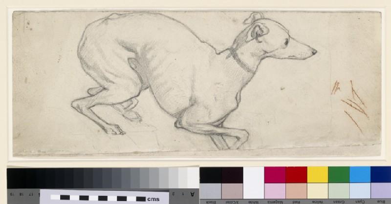 Study of a Greyhound (WA1966.92)