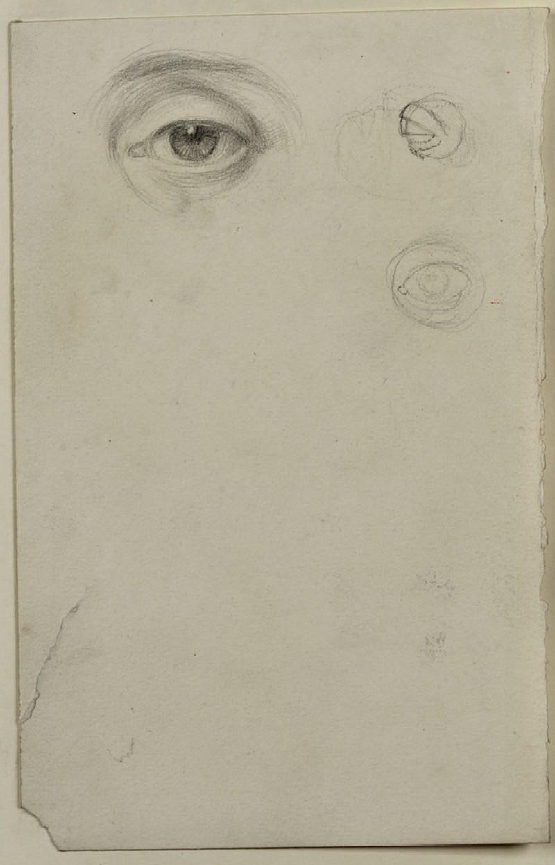 Study of a Left Eye