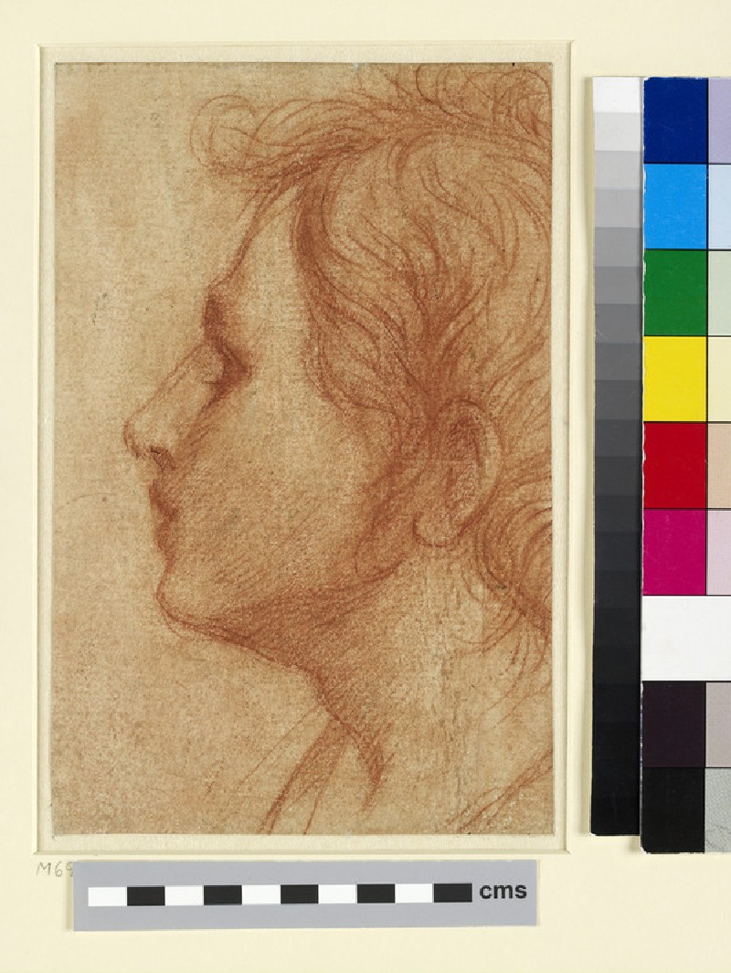 Head of a Youth in Profile (WA1995.214)