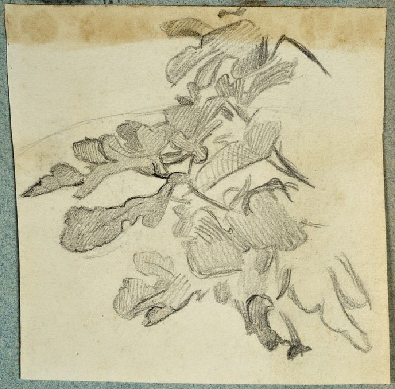 Study of Fig Leaves