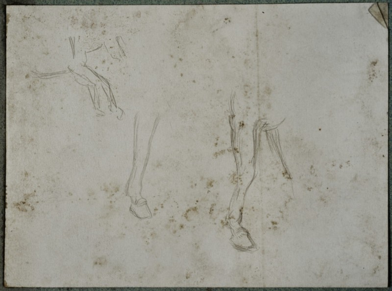 Studies of the Legs of a Donkey