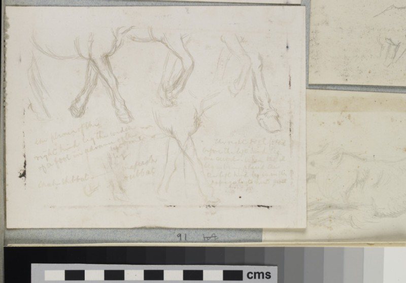 Studies of the Legs of a Donkey for 'The Triumph of the Innocents' (WA2007.6.91)
