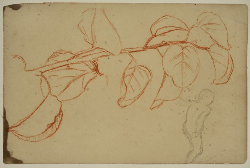 Studies of a Plant in Leaf and of a Child