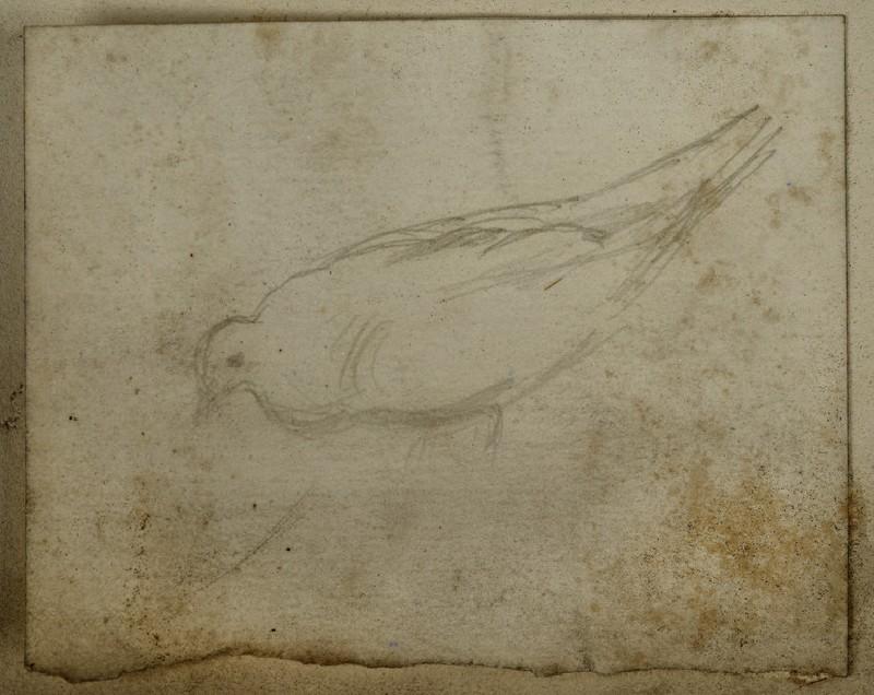 Study of a Pigeon (WA2007.7.40)
